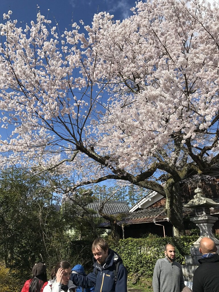 Philosopher's path in Kyoto with cherry blossoms