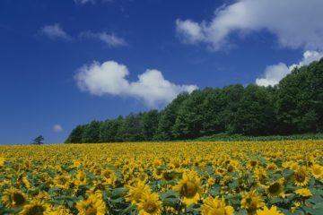 All about Hokkaido